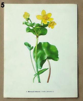 staré obrázky květin blatouch