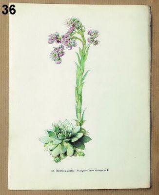 staré obrázky květin netřesk