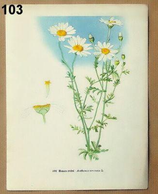 staré obrázky rostlin rmen
