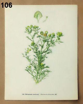 Staré obrázky květin a rostlin vintage