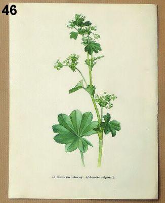 staré obrázky rostlin kontryhel