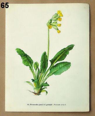 staré listy atlas květin