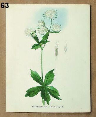 vintage obrázky k zarámování květiny
