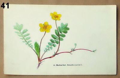 staré obrázky květin do rámečku