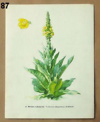 obrázky do rámečku éčivé rostliny