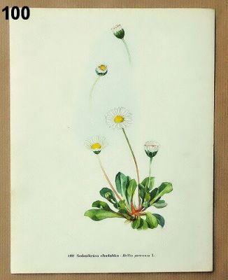 starodávné obrázky květiny k zarámování