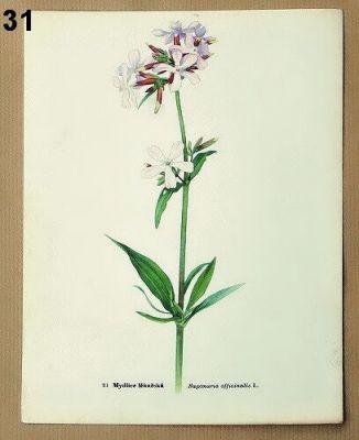 staré obrázky květin k zarámování