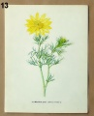 obrázky rostlin na tvoření