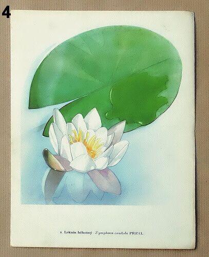 staré obrázky květin a rostlin