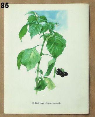 vintage obrázky rostlin