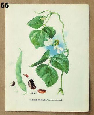 vintage rostliny obrázky do rámečku