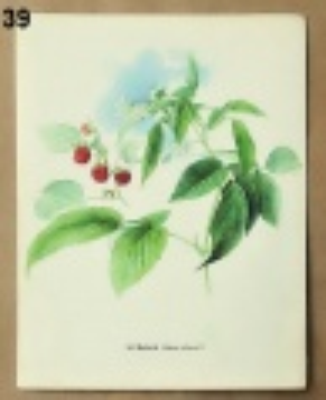 staré obrázky rostlin do rámečku