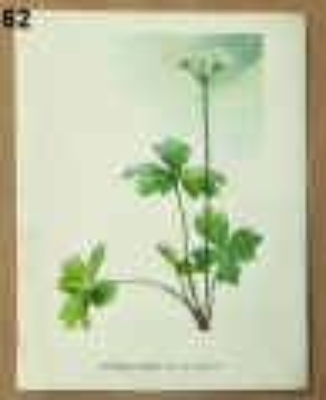 listy ze starého atlasu rostlin