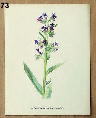 starý atlas léčivých rostlin k zarámování
