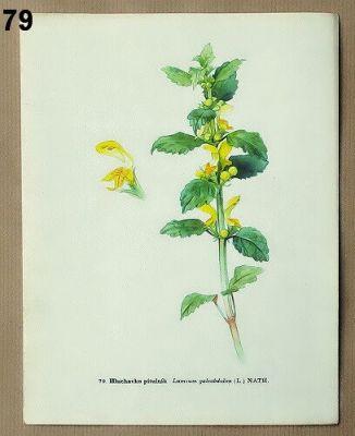 vintage obrázky léčivých rostlin k zarámování