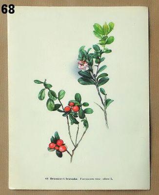 vintage obrázky květin do rámečku