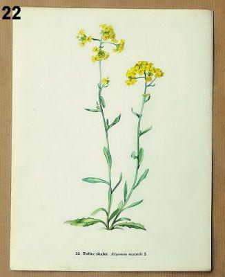 staré obrázky rostlin k zarámování