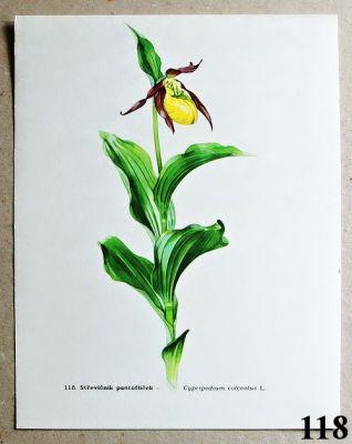 atlas květin střevíčník pantoflíček