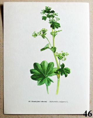 atlas rostlin kontryhel