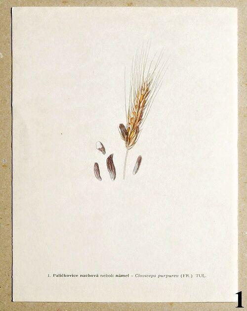 atlas rostlin námel