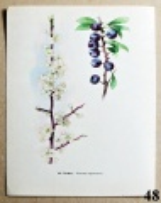 atlas rostlin trnka
