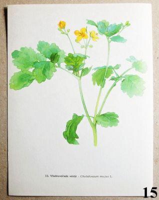 atlas rostlin vlaštovičník větší