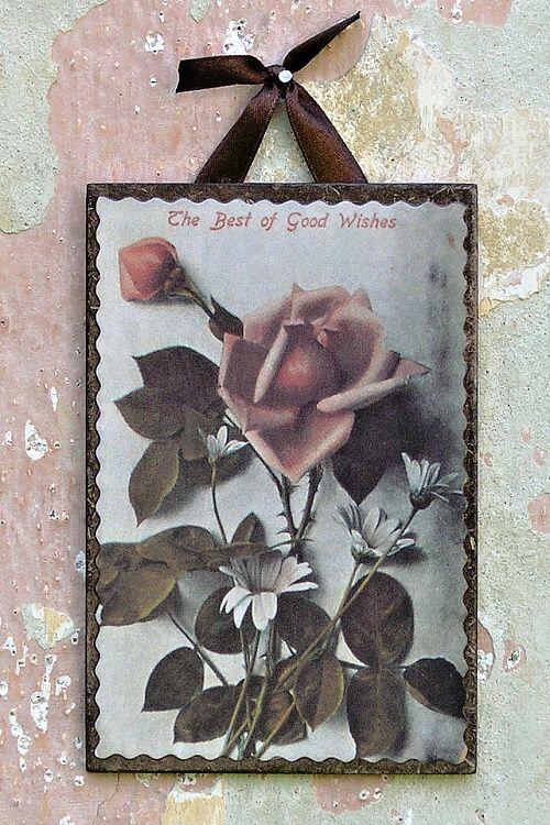 obrázek vintage růže